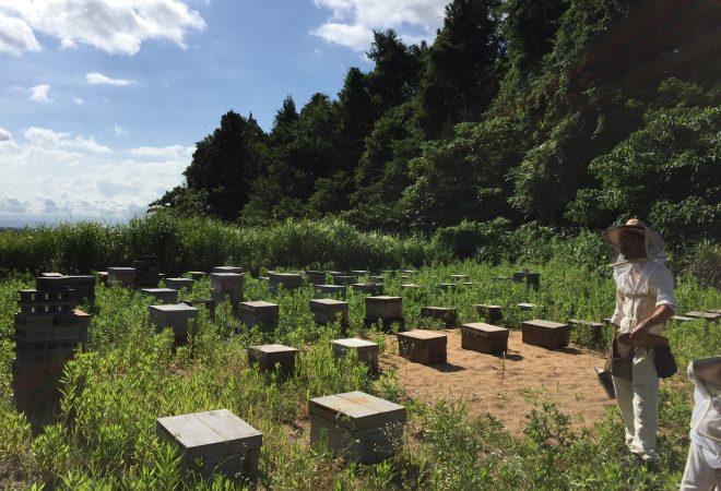 ミツバチってスゴイ!養蜂場ツアーに行ってきました。